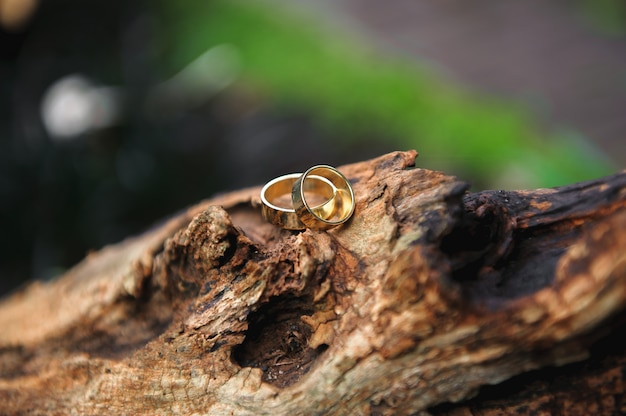Details wedding rings leaves autumn nature sun