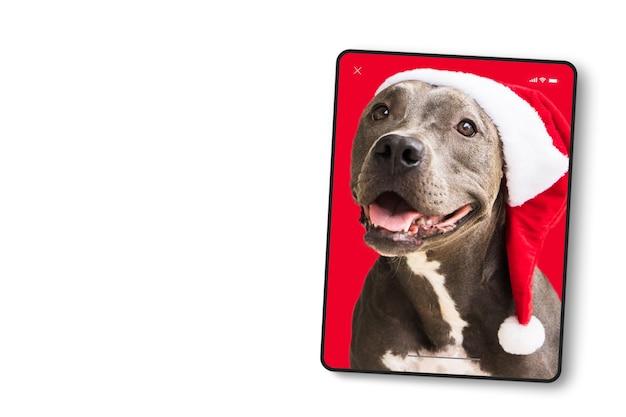 크리스마스를 위해 흰색 배경에 격리된 빨간색 산타 모자를 쓴 핏불 개가 있는 태블릿 형식의 장치 화면. 산타클로스가 오기를 기다리고 있습니다. 선택적 초점입니다.