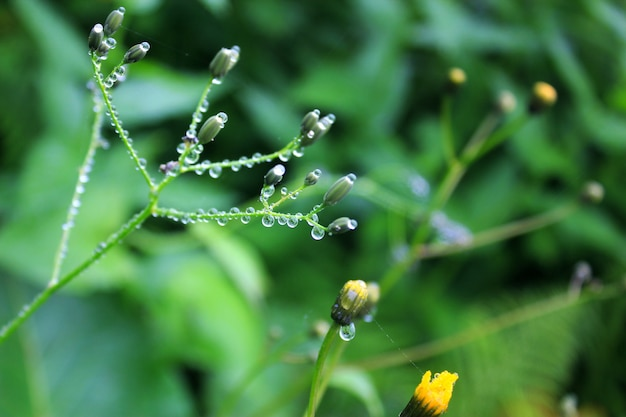 Dew drops on the flowers and plants, rainy day, macro and close-up photo, nature surface.