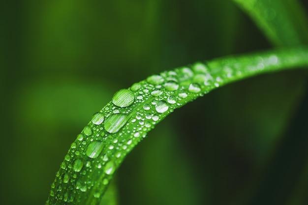 Dew drops on grass blade closeup