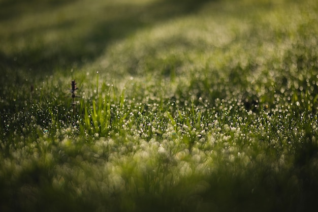 Капли росы на зеленой траве рано утром
