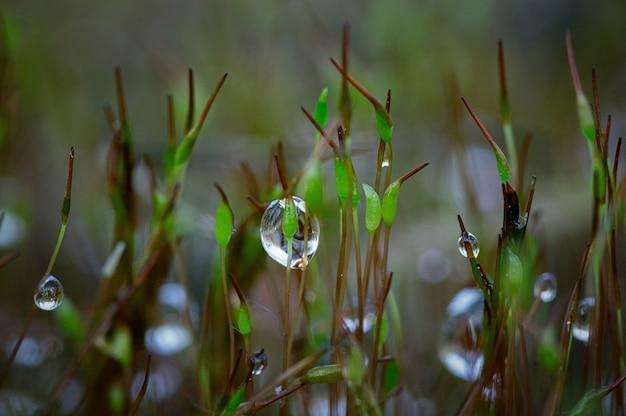 잔디에 이슬 방울