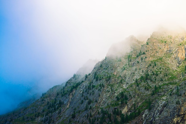 朝霧の森と斜めの山腹がクローズアップ。霞んでいる巨大な山。