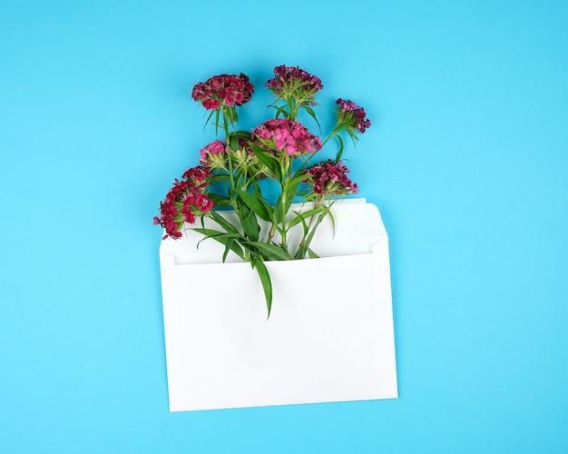 トルコのカーネーションdianthus barbatusの花のつぼみとホワイトペーパー封筒