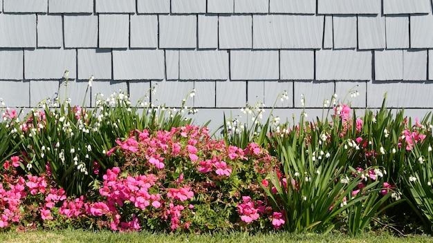Цветы диасии и снежинки, калифорния, сша. снежная капля нежного цветения. домашнее озеленение, американское декоративное декоративное комнатное растение, естественная ботаническая атмосфера. зеленая лужайка и стена дома деревянная.