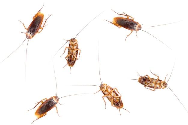 Вырезать много тараканов на белом изолированные