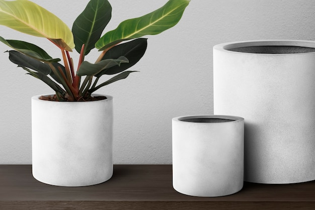 Dieffenbachia camille pianta in vaso grigio