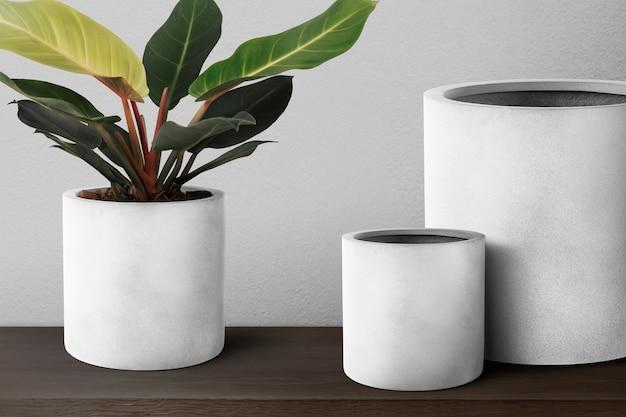 灰色の鉢にディフェンバキアカミーユ植物