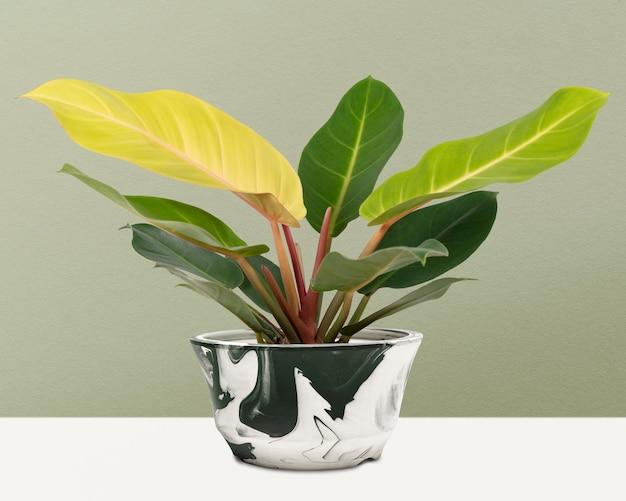 ポットのディフェンバキアカミーユ植物