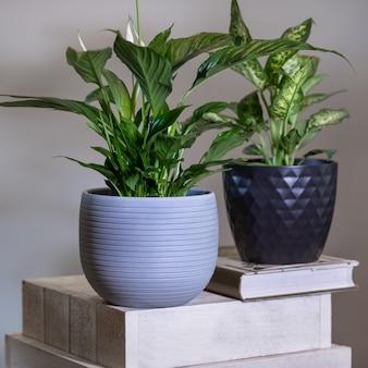 ピースリリー、スパティフィラム植物とディーフェンバッキアダム杖