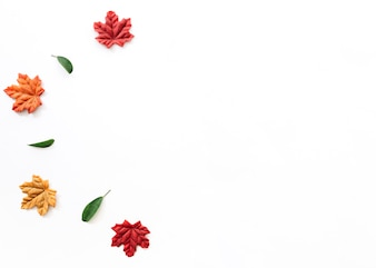 Different autumn leaves arranged in curve on white background