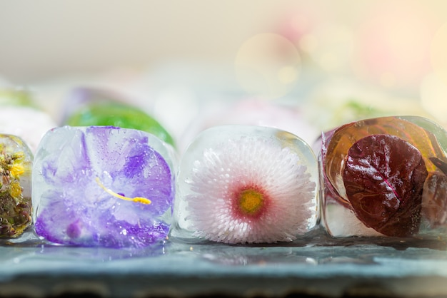 Different beautiful frozen flowers in the ice cubes