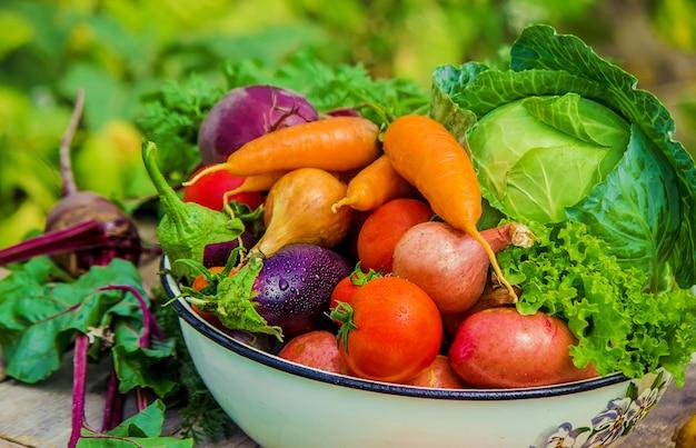 Different bio vegetables. selective focus. food nature.