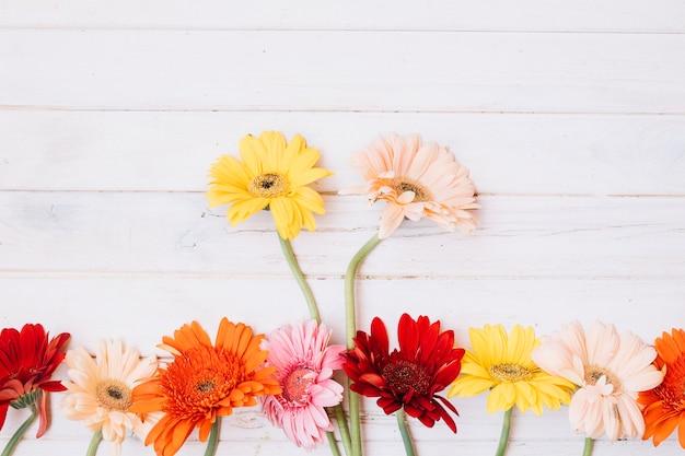Различные цветущие цветы на столе