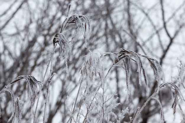 겨울철에 단풍이 없는 다양한 종류의 낙엽수, 겨울철에 눈과 눈보라가 내린 후 눈으로 덮인 나무