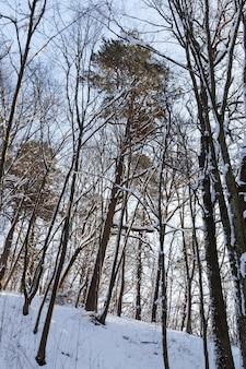잎이없는 다양한 종류의 낙엽수