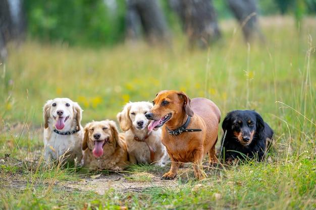 다양한 종류의 개들이 자연 배경에 줄을 서고 있습니다. 귀여운 애완 동물이 걷고 있습니다.