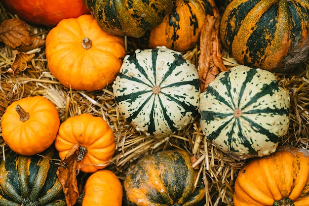 Different color and size pumpkin decor on outdoor market, autumn food