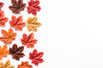 Different colorful autumn leaves over white background