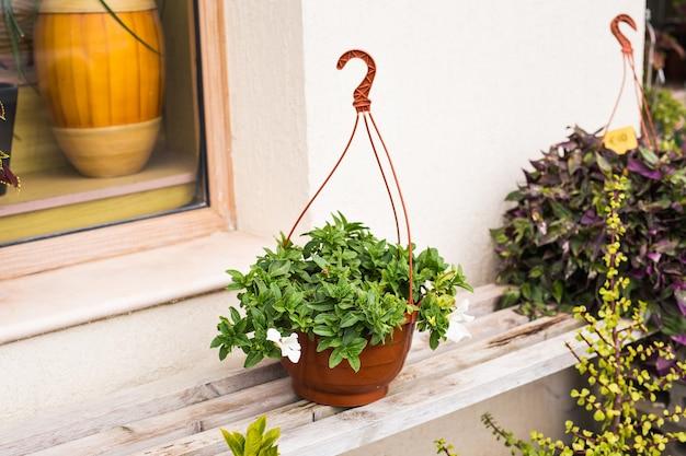 異なる色の鉢植えと苗の屋外