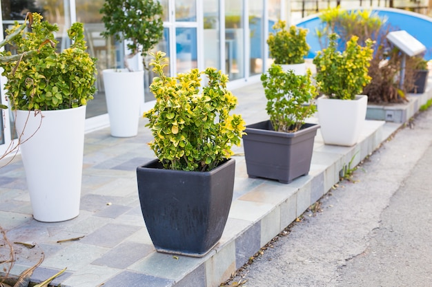 さまざまな色の鉢植えの植物や苗木屋外