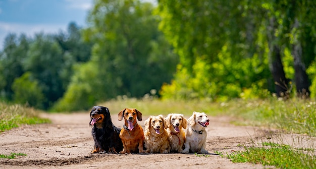 Разные породы собак. глядя прямо. зеленая трава фон.