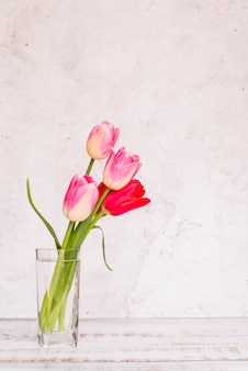 Different fresh colourful tulips in glass