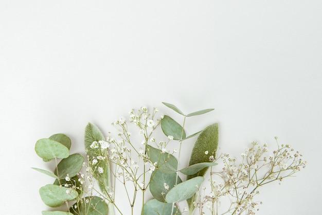別の緑の花と白い背景のユーカリ。フラット横たわっていた、トップビュー。コピースペース