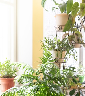 화창한 겨울 날 집 창문 근처에 있는 다른 녹색 화분에 심은 집 식물. 트렌디한 홈 가드닝. 복사 공간이 있는 이미지.