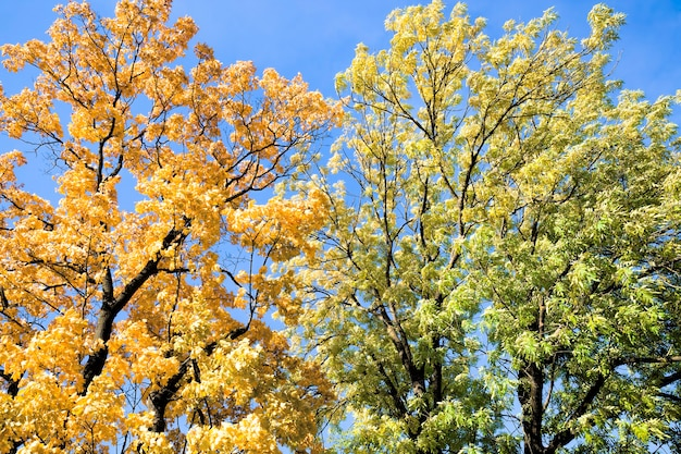 Different kinds of deciduous trees