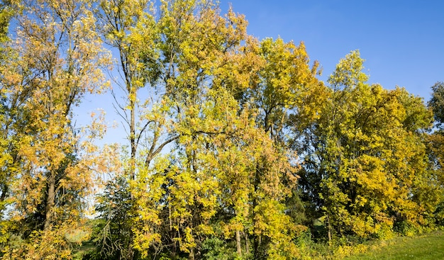 Различные виды лиственных деревьев с измененной окраской листвы осенью, солнечная погода осенью.