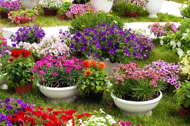 냄비에 다른 종류의 정원 꽃. 조경 디자인 꽃. potflowers에 다채로운 피튜니아