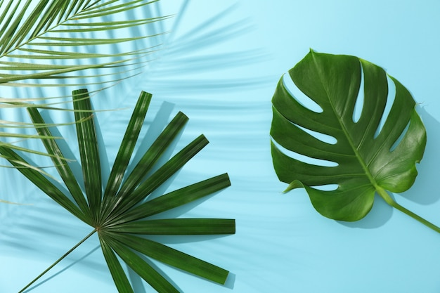 Different palm leaves on blue table