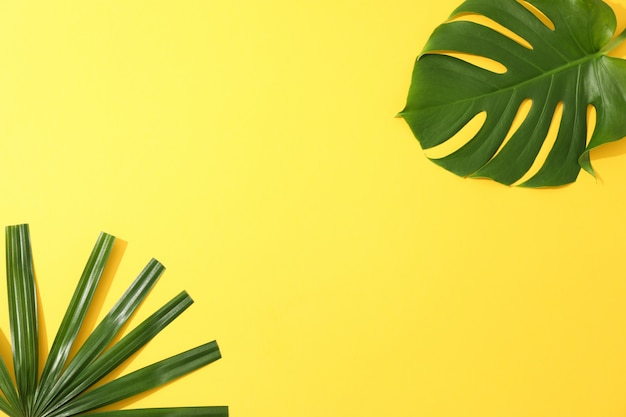 Different palm leaves on yellow table