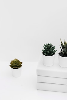 Different potted cactus plant with stacked of books against white background