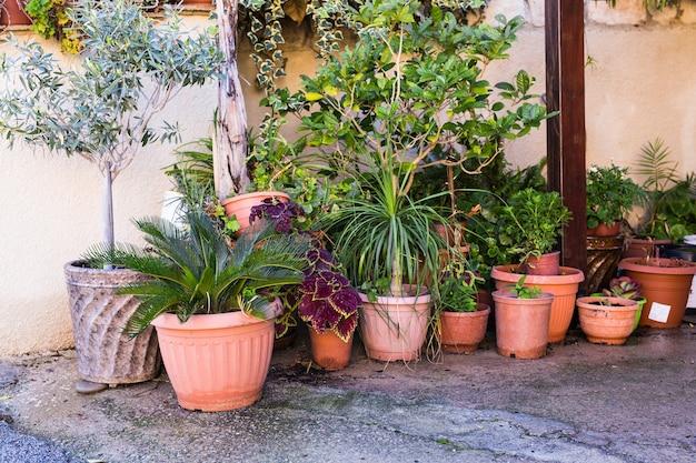 花屋の入り口近くにあるさまざまな鉢植えの植物と苗木。