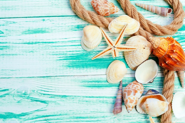 Different sea shells on color wooden