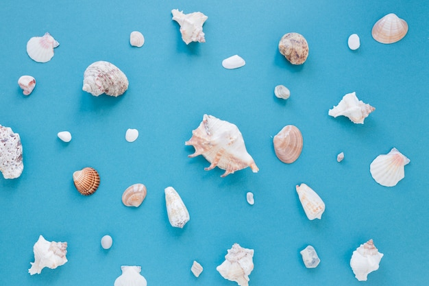 Different sea shells on table