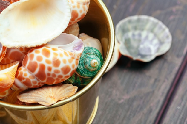 Different sea shells