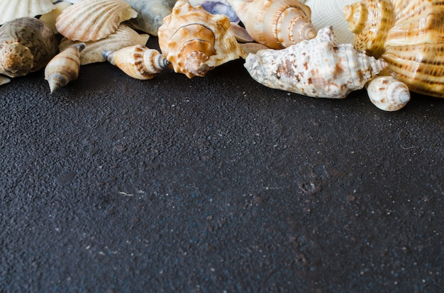 Different seashells on dark concrete background. summer vacation concept.