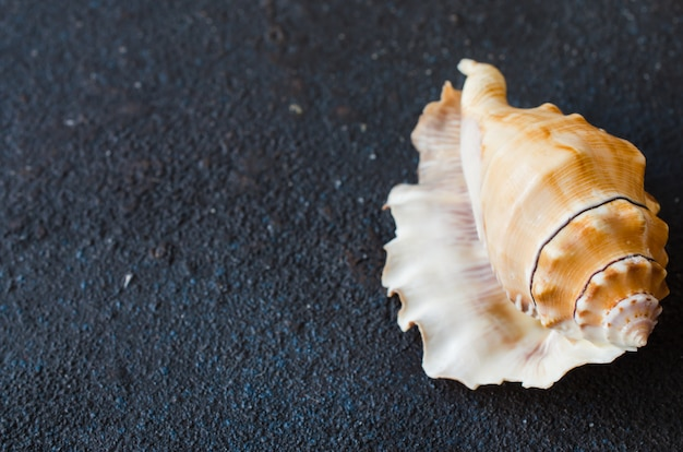 Different seashells on dark concrete table. summer vacation concept.