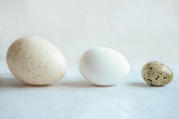 Яйца разных размеров: индейка, курица и перепелиные яйца.