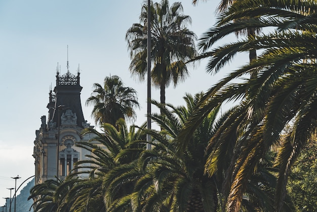 Различные виды пальм на городской улице