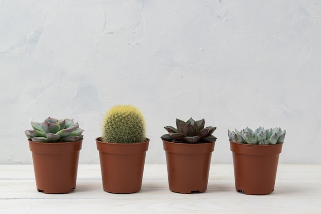 Different succulent plants in different pots.