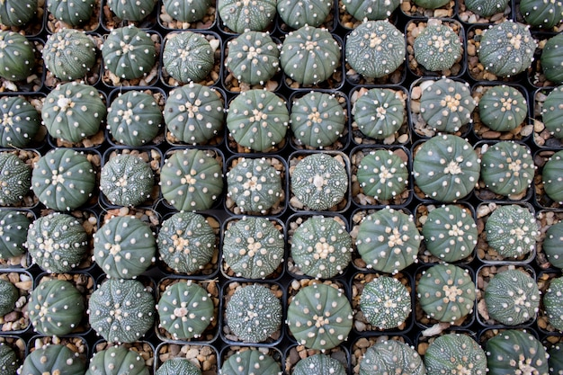 Different succulents and cactus in black pots,overhead or top view