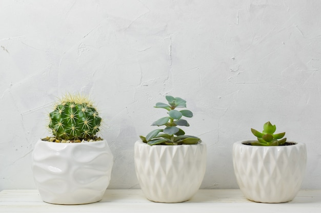 Different succulents in different pots. three indoor flowers in a pot on a wooden shelf