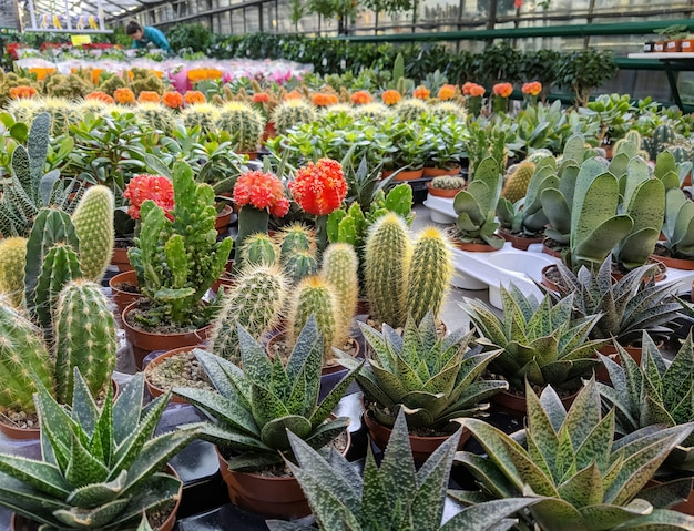 Different succulents in the greenhouse