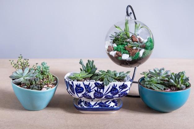 Различные террариумные растения на столе