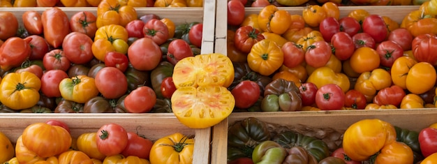 Different tomatoes in french market