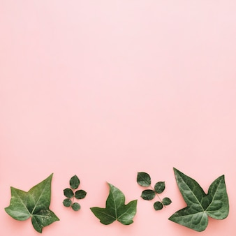 Different tropical leaves arranged in a row on pink background